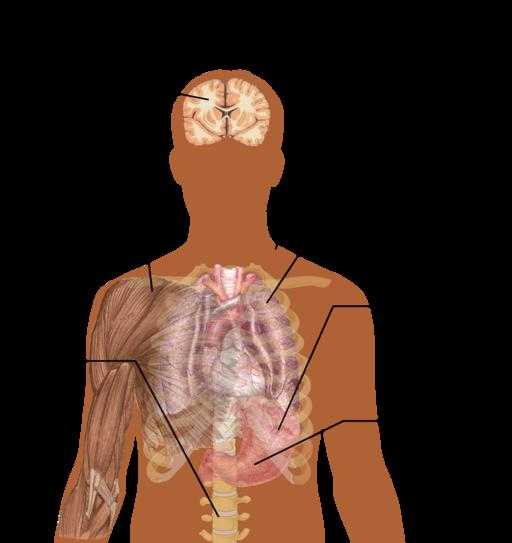 512px-Symptoms_of_Malaria